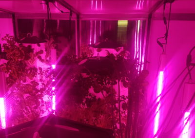 Grow lights